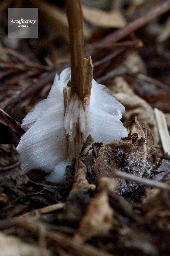 霜 ば しら 霜柱のお菓子「霜ばしら」とは?サクッと溶ける冬季限定の仙台銘菓